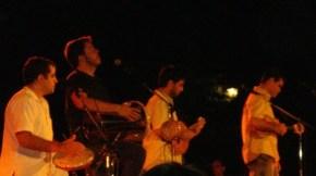 Casuarina à Lavérune, les jeunes pousses prennent le samba par lesracines